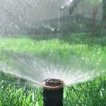 Фото Орошение газона дождевателем спрейного типа