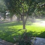 Автоматический полив газона и дерева в Слободе фото