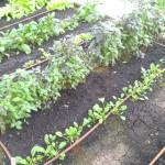 Капельная труба DripLine для полива огорода