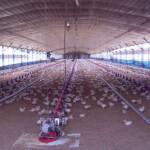 Туманообразование для птицефабрик