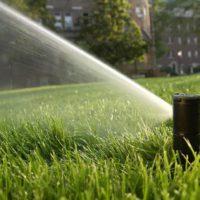 Ротор Rain Bird 5004 поливает газон