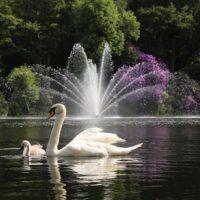 Аэрационный фонтан Equinox от компании Otterbine и лебеди
